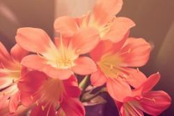 Gėlių užsakymas internetu